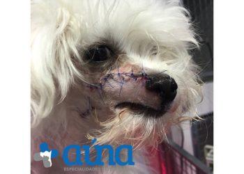 cirugia mascitoma nariz hospital veterinario auna valencia 14