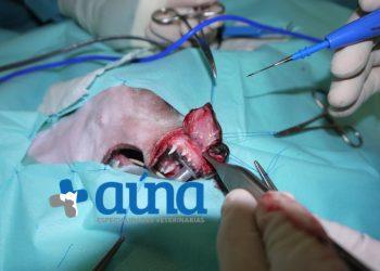 cirugia mascitoma nariz hospital veterinario auna valencia 6